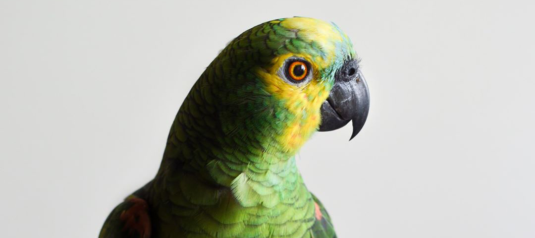 Conférence : Qu'est ce que la communication animale ?