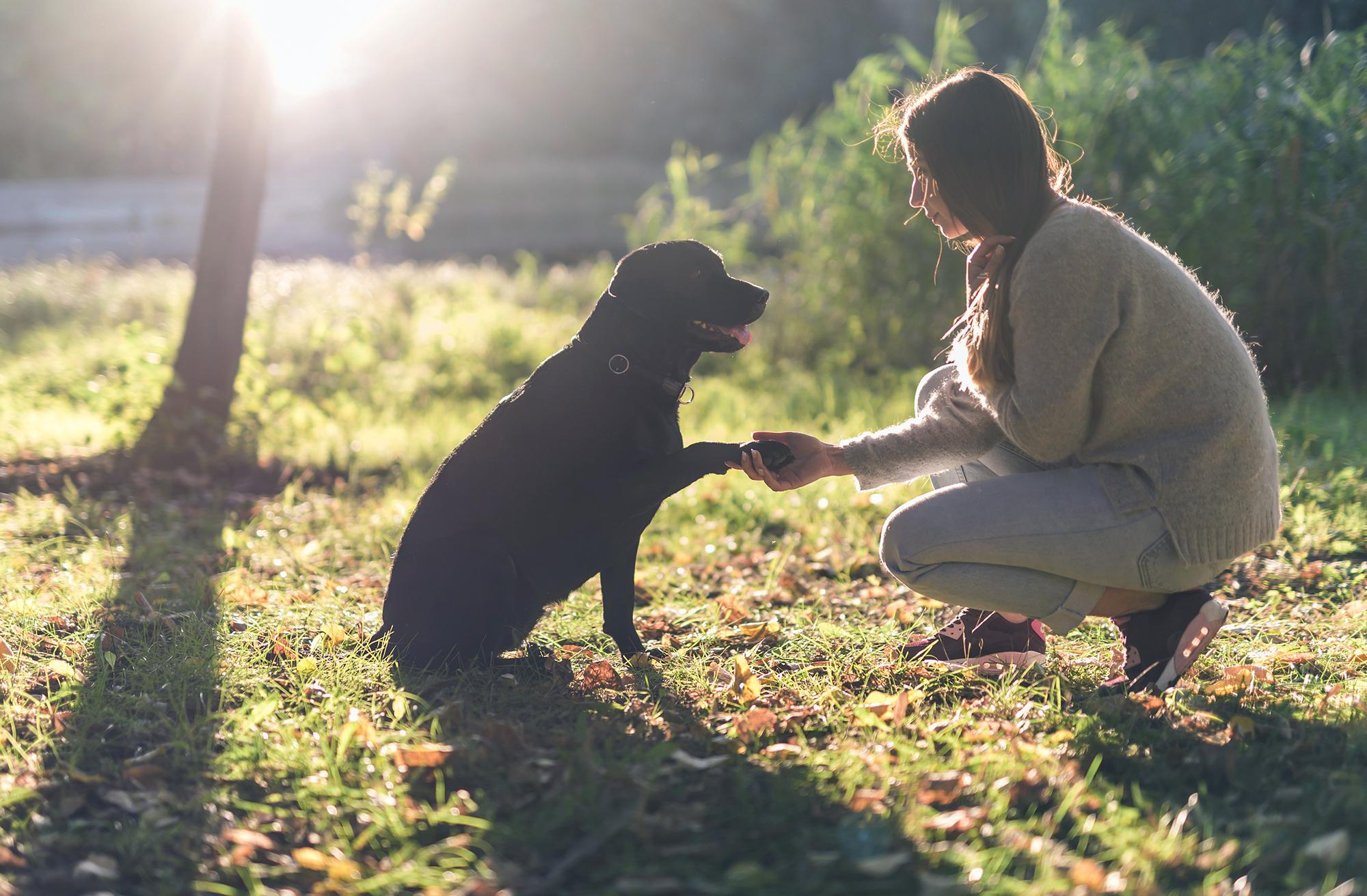 Stage adultes – Initiation à la communication animale