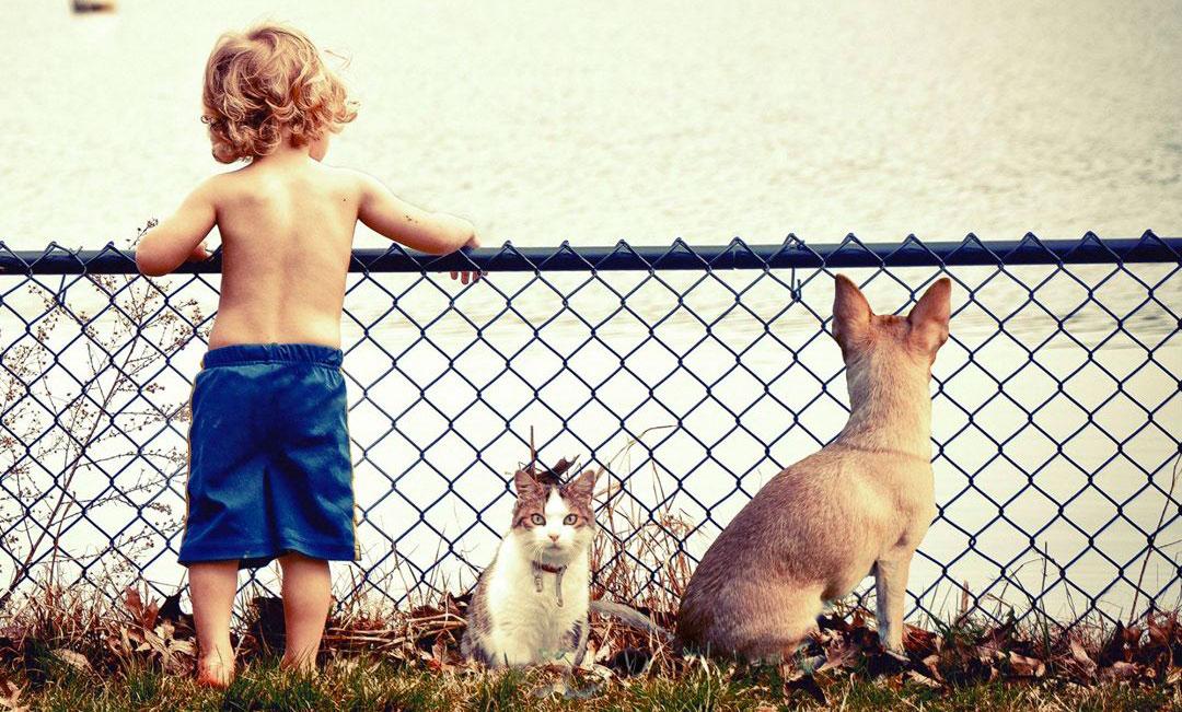 Stage enfants – Initiation à la communication animale