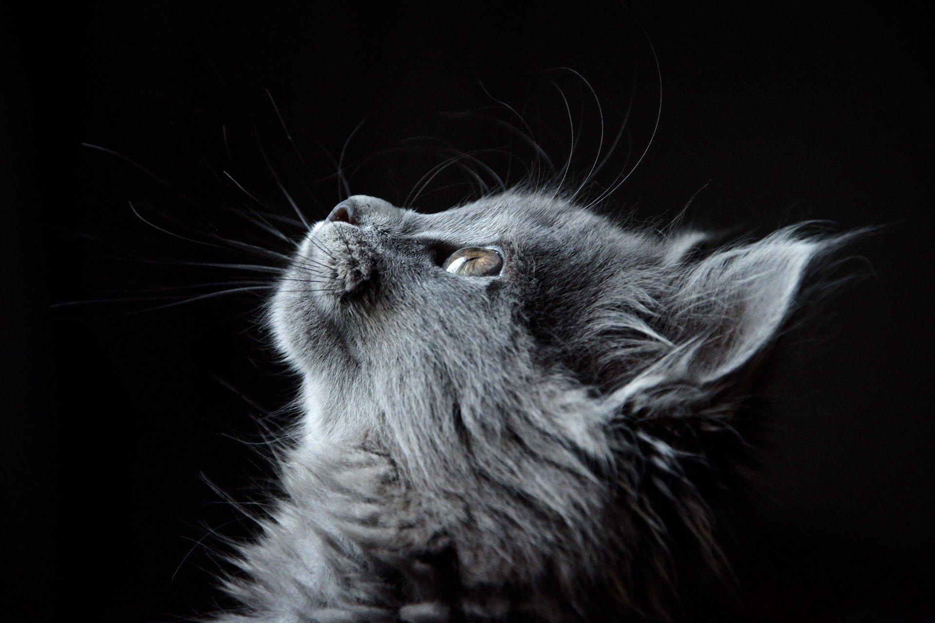 Live Facebook : Les animaux et la médiumnité