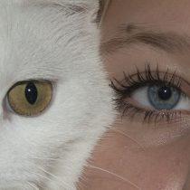 eyes-943122_1920