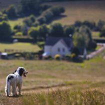 puppy-5269050_1920-1